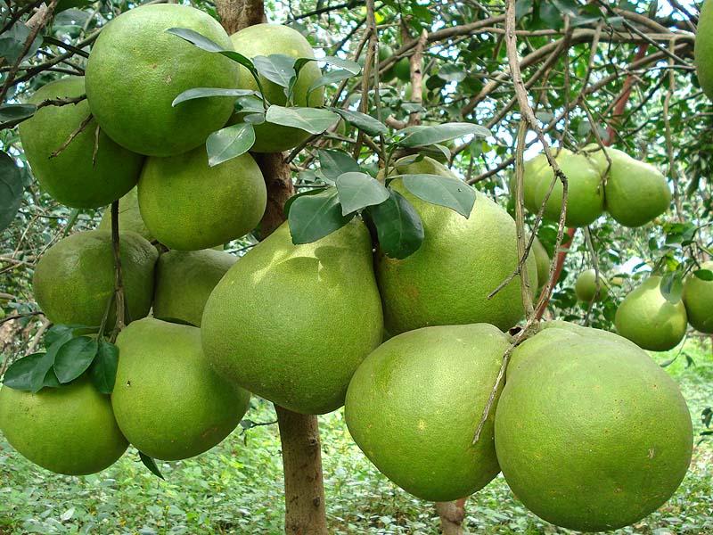trái cây ít đường