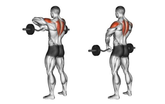 upright-barbell-row
