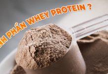 Thành phần Whey Protein là yếu tố quan trọng quyết định đến kết quả bổ sung Protein và tập luyện của người tập thể hình.